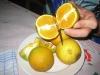 Zum Nachtisch saftig-süße eigene Orangen ..