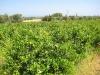 Unsere eigene, ganz natürliche Weinrebe ..